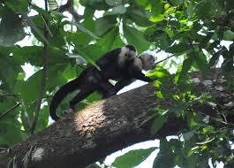 Carara National Park Costa Rica