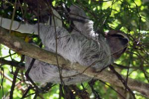 Rainforest Central Pacific Tours
